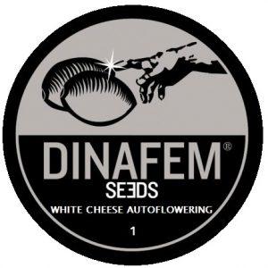 white-cheese-aut-1