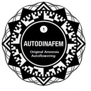 original-amnesi-auto