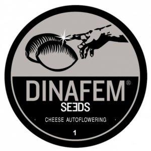cheese-autoflowering-dinafem-1
