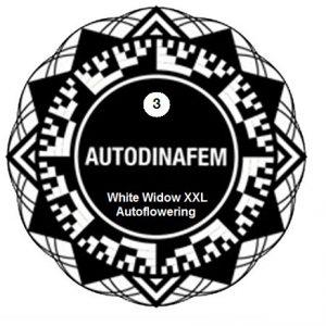 white widow xxl