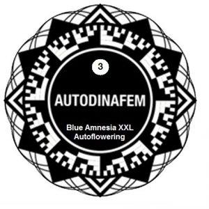 Blue amnesia xxl3