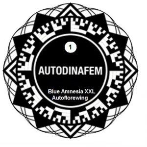 blue amnesia xxl x1