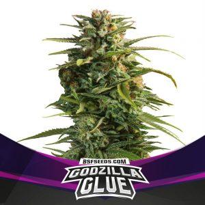GODZILLA-GLUE-FEM-1000X1000-1